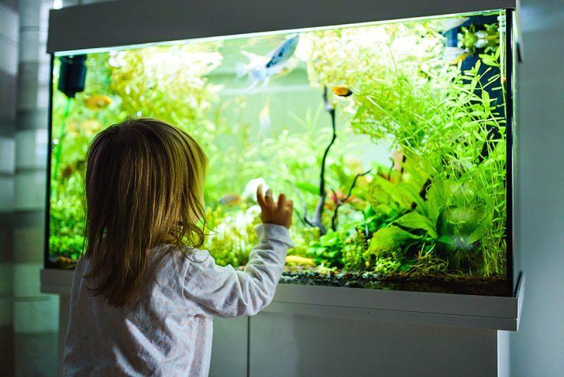 Małe marzenie – akwarium dla dzieci